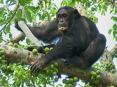 L'essere umano e le grandi scimmie