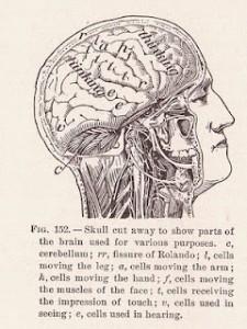 terapia psicodinamica