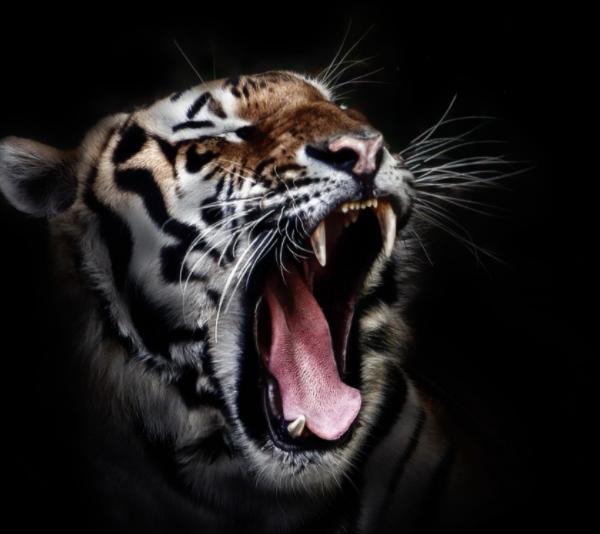 Liberarsi dalla bestia cattiva - Consulenza on line