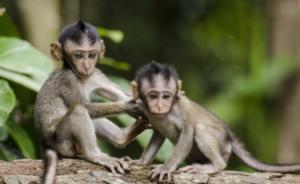 A scuola con le scimmiette