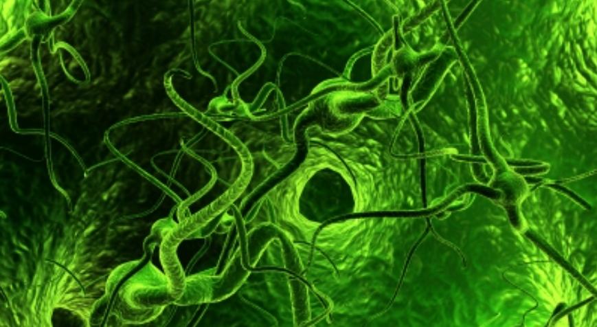 Alzheimer: e se funzionasse uno stimolatore elettrico?